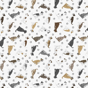 Tiny assorted Border Whippets - gray