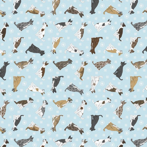 Tiny assorted Border Whippets - winter snowflakes