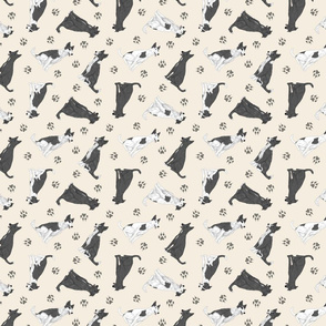 Tiny black and white Border Whippets - tan
