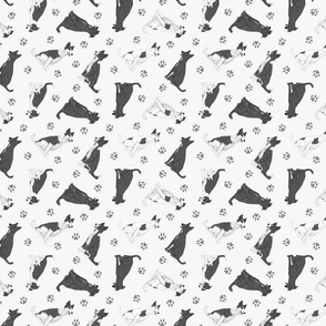 Tiny black and white Border Whippets - gray