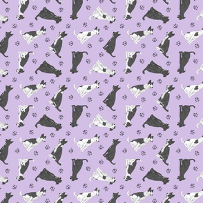 Tiny black and white Border Whippets - purple