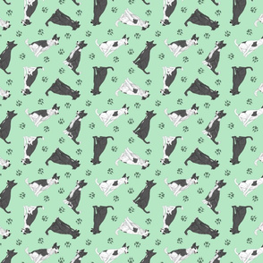 Tiny black and white Border Whippets - green