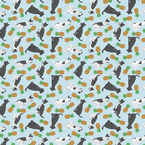Tiny black and white Border Whippets - pineapples