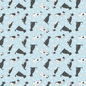 Tiny black and white Border Whippets - winter snowflakes