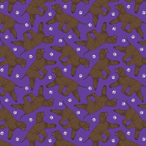 Trotting Irish Water Spaniels and paw prints - purple