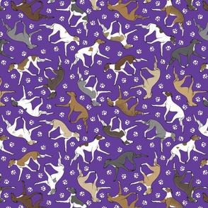 Trotting Italian Greyhounds and paw prints - purple