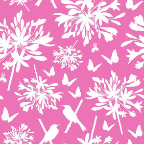 Agapanthus Enchantment (butterflies, birds + bees) - candy pink, large