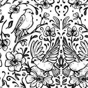 Line Drawings of Birds