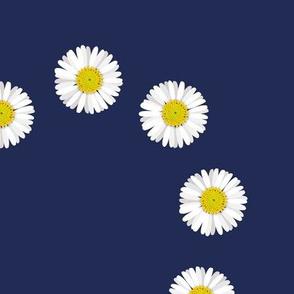 Love_heart_daisies