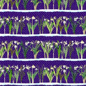 Dark purple snowdrops border