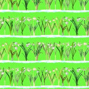 Spring green snowdrops border