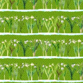 Grass green snowdrops border