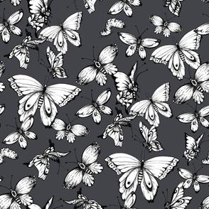 Black buttrflies