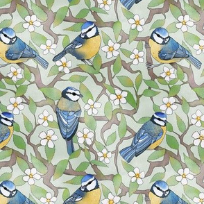 Blue Tits in Cherry Blossom