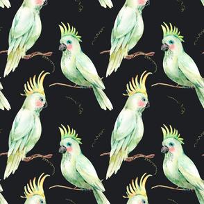 White parrot on black