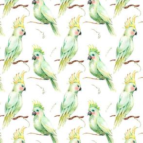 White parrots tropical pattern