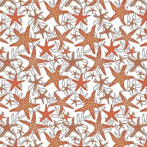 starfish pattern design on white