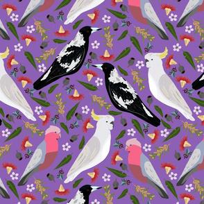 Purple Australian birds gallah magpie cockatoo  5000 x 5000