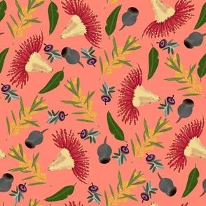 Orange Red Flowering Gum Eucalyptus Wattle Gumnut