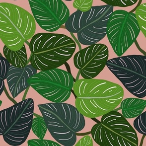 Tropical Pin-stripe Calathea Leaves Indoor Plant Botantical blush pink