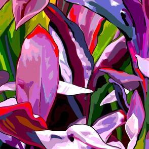 jumbo Red-purple  ti leaf Jungle