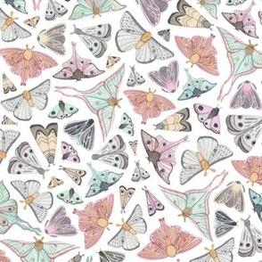 Dusky Moths