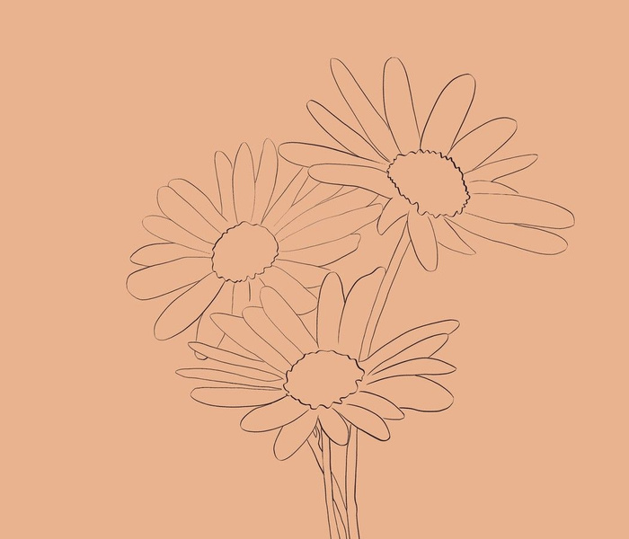 Daisies Line Drawing