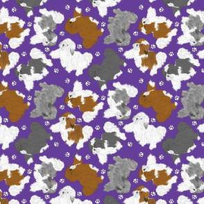 Trotting assorted Havanese and paw prints - purple