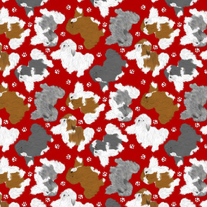 Trotting assorted Havanese and paw prints - red