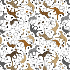 Trotting assorted Whippets and paw prints - white