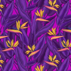 Tropical garden- bird of paradise flower4