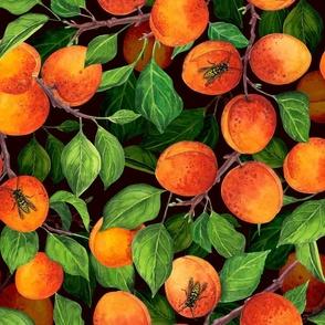 Apricot garden on dark background