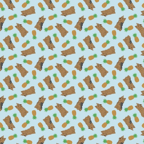Tiny Norwich Terrier - pineapples