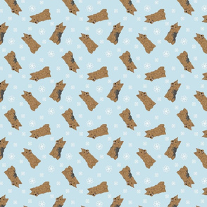 Tiny Norwich Terrier - winter snowflakes