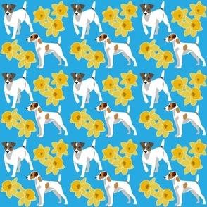 Jack Russel Terrier Dogs