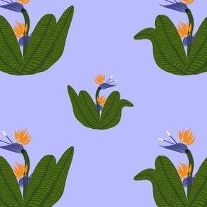 Bird of Paradise Floral