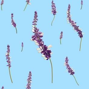 Purple Sage in Bloom