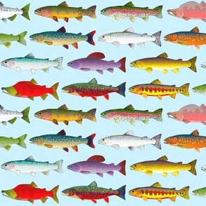 14 Trout and Salmon vibrant sky blue