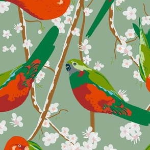 king parrots on sage (large scale)