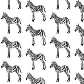 Zebra baby black and white
