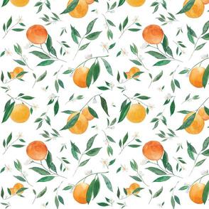 Orange Blossoms on White
