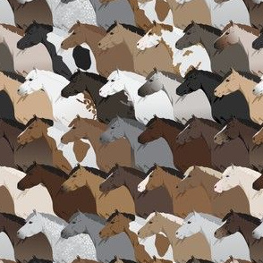 Horse & Pony Coat Colors Pattern