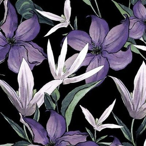 Night Clematis, Purple flowers on a black background