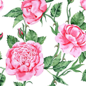 Pink roses watercolor painting in graded wash technique