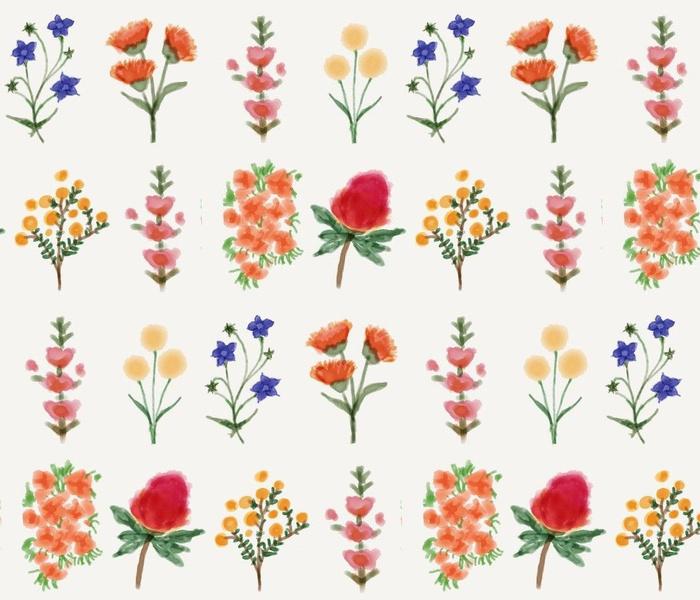 Australian wildflowers in watercolor