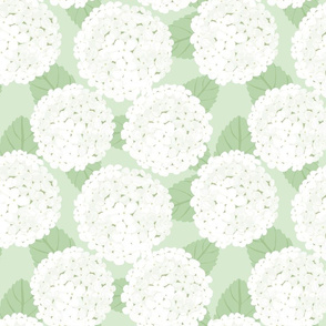 "WHITE HYDRANGEAS on green12"""