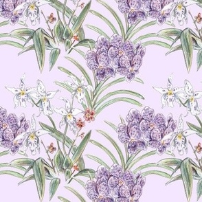 Purple and white Orchids in Colored Pencil