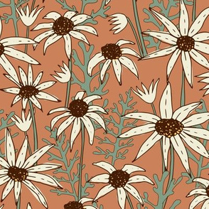 Flannel Flower - Australian Native