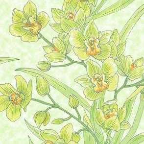 Large-Yellow Green Cymbidium Orchid