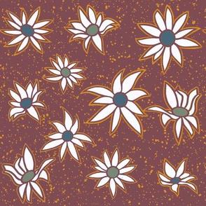 Flannel flowers - Australian wildflowers